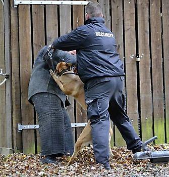 Hondenbeveiliging Security Noord Nieuwenhuis